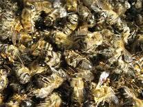 Купить Спиртовая настойка подмора пчел
