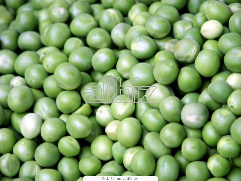 Buy Peas seeds Tsarevitch wholesale Ukraine