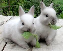 Купить Комбикорм для кроликов