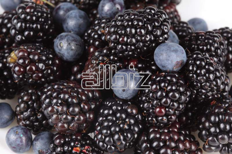 Buy Blackberry to buy