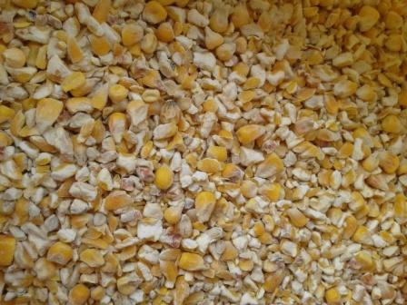 Купить Бита кукурудза