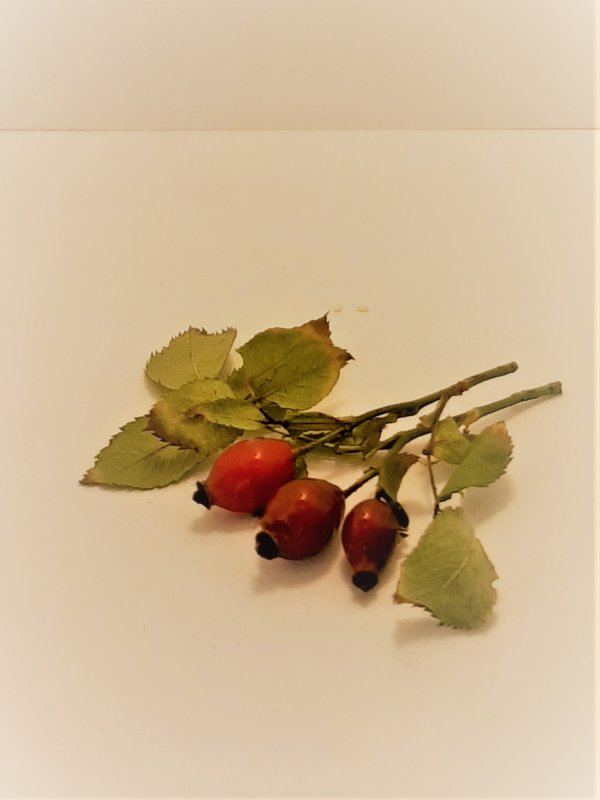 Buy Rosehip berry