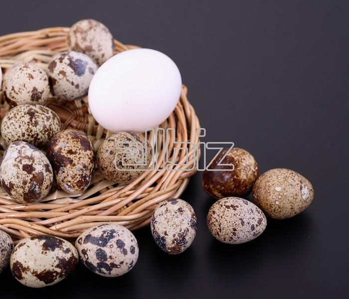 Купить Яйца перепелиные