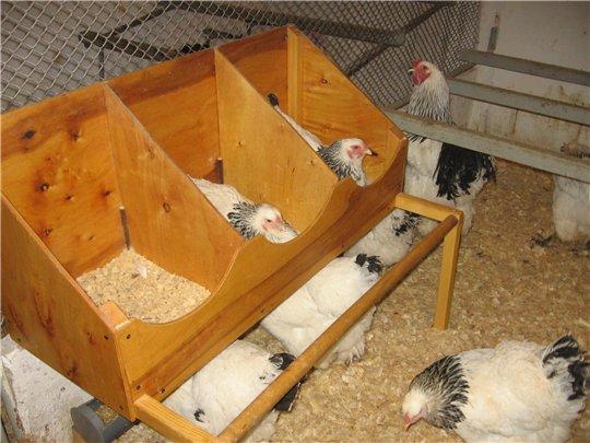 Кормушки для домашних птиц