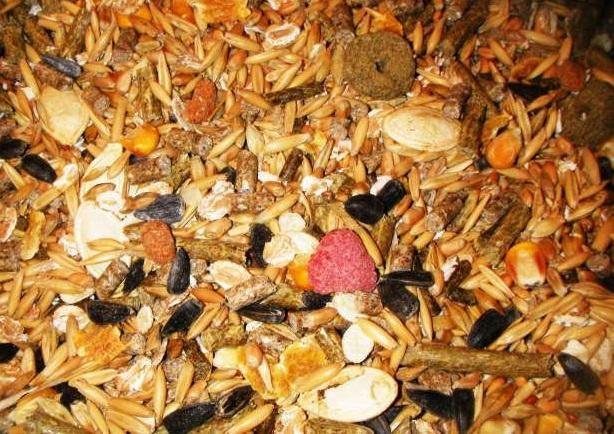 Купить Высококачественные корма для животных по Тернопольской области