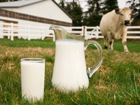 Концентраты для увеличения надоев в крупного рогатого скота