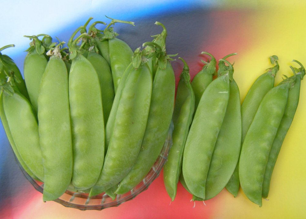 Купить Горох посівний (овочевий) сорт Спадок, 10 г