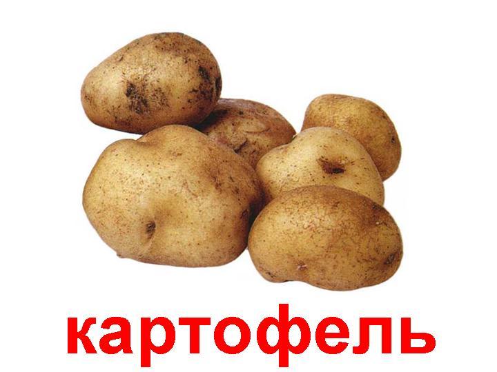 Купить Покупаем продовольственный картофель