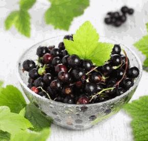 Купить Свежие ягоды черной смородины
