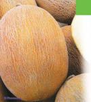 Купить Продам 60 т дыни и арбуза