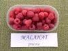 Купить Саженцы малины Malahat
