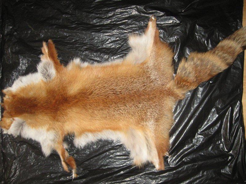 Как выделывают шкуры лис в домашних условиях