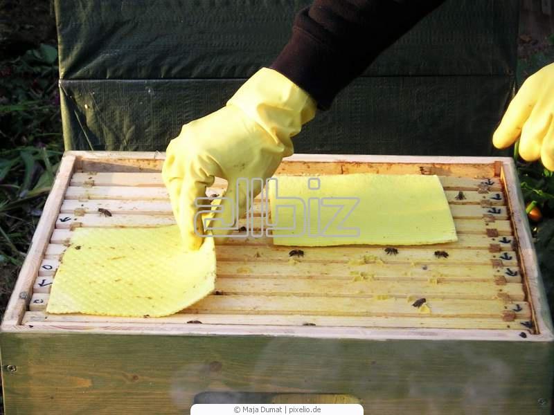 Оборудование по пчеловодству своими руками