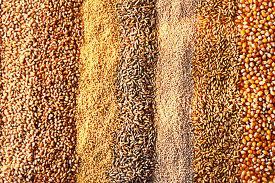 Купить Зерно