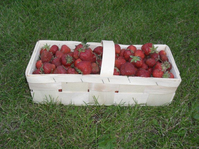 Купить Корзинка для ягод 1кг