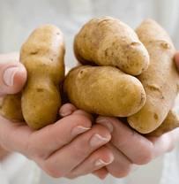 Купить Картофель универсальный