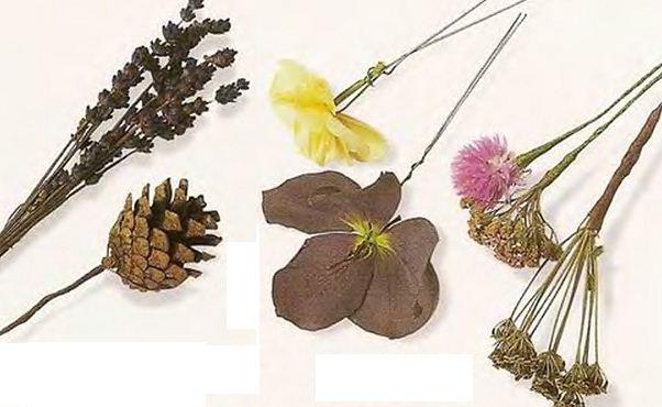 Декоративные сухоцветы купить сохранить живые цветы лилии