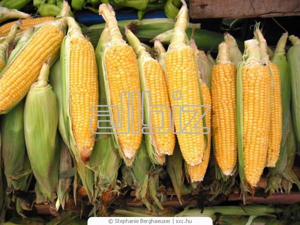 Купить Кукуруза, Украина, купить, оптом