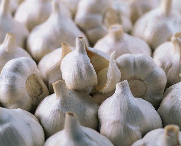 Buy Garlic Gulliver
