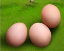 Купити Яйця, замовити Львов