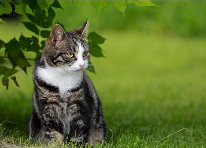 Купить Гигиенический наполнитель для кошачьего туалета CatPlus