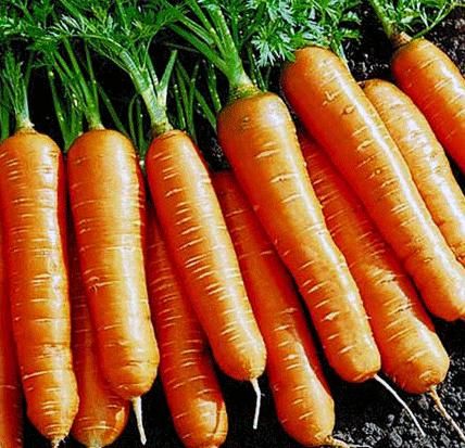 """Продам семена моркови """"Флакийского типа"""""""
