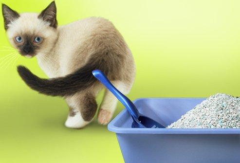 Купить Наполнители для кошачьих туалетов