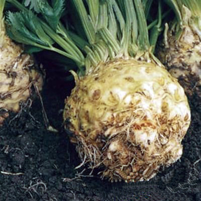 "I will sell seeds ""Celery"" of the Italian selection, high quality"