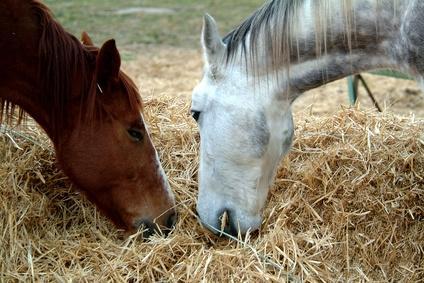 Купить Корма для лошадей
