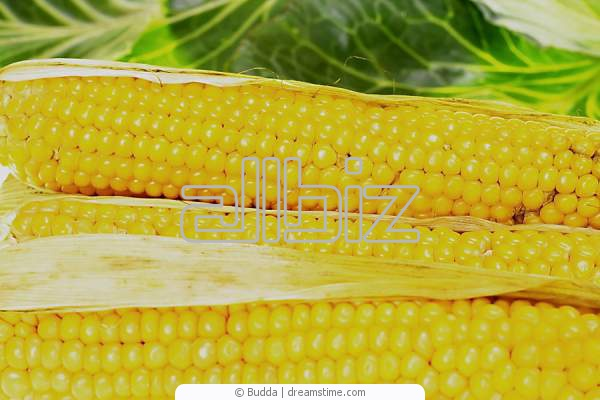 Продам кукурузу оптом, купить оптом кукурузу Украина