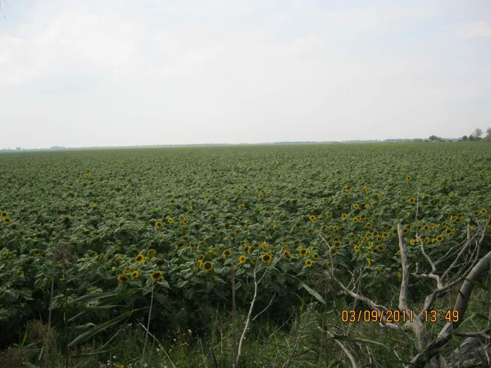 Купить Продам агрофирму 2400га в Украине Запорожская область