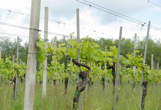 Купить Стойки для виноградников (ЖС)