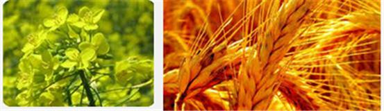 Наномикс-Бобовые для обработки семян