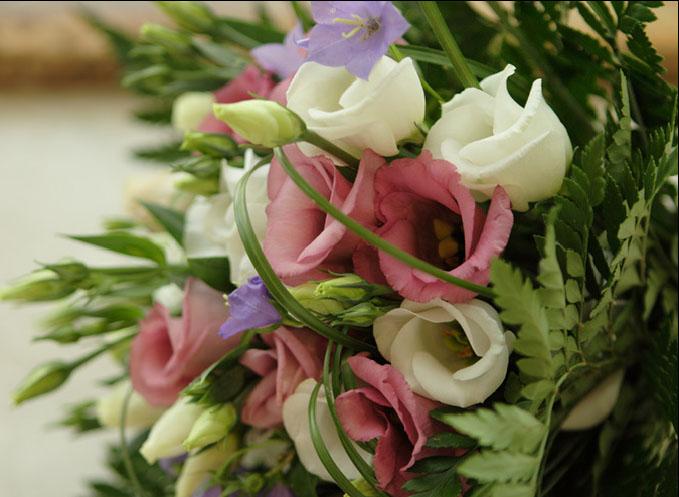 Куплю живые цветы винница с выбором заказать доставку цветов на
