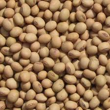 Soy from the producer at wholesale prices