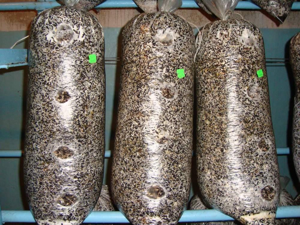 грибы в мешках фото