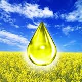 Buy Oil rape DINNOPM51605 (For production of the biodiesel)