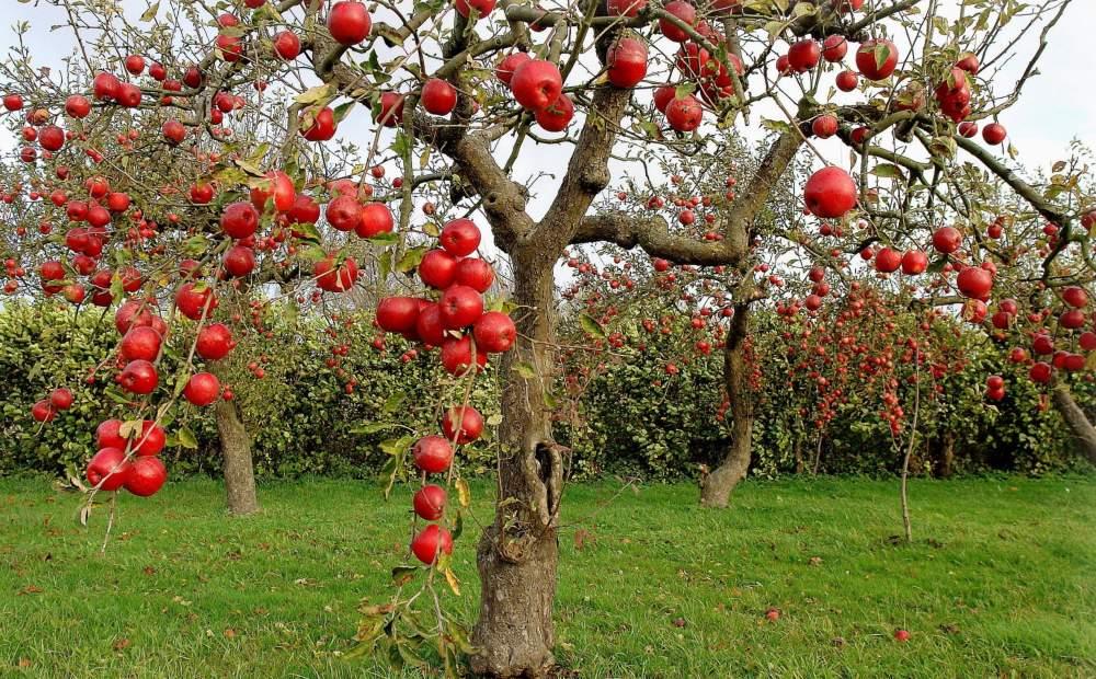 Можно ли садовые деревья
