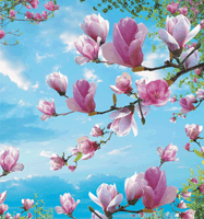 Buy Photowall-paper Magnolia 2