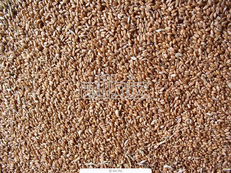 Купить Крупы пшеничные