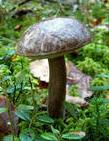 Торф экскаваторный (для грибов), торф  сельскохозяйственный