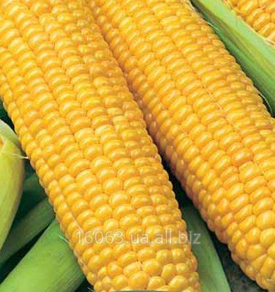 Купить Кукуруза сахарная Мегатон F1