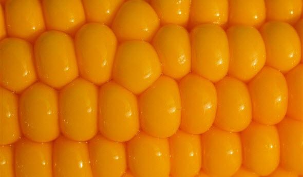 Купить Кукуруза Кобзо МВ урожай 2013