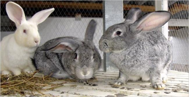 Комбикорм для кроликам своими руками фото