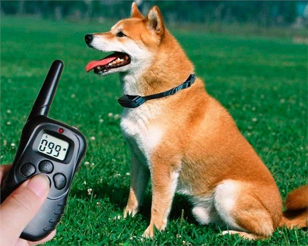 Buy The electronic collar for dogs Training an electro collar for training of dogs
