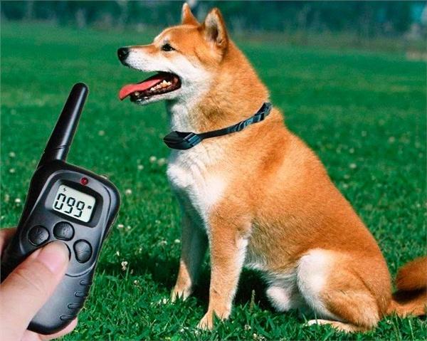 Купить Электронный ошейник для собак, Обучающий электро ошейник для тренировки собак