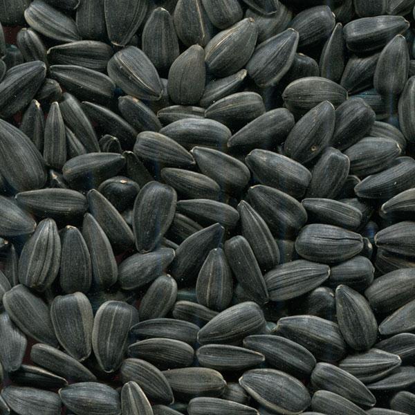 Купить Семена подсолнечника НС-Х-6043 купить в Украине, Семена подсолнечника НС-Х-6043, НС-Х-6043 Подсолнечник семена купить, Украина