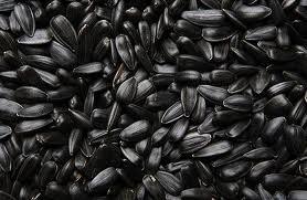 Купить Семена подсолнечника ЗЕВС купить в Украине, Купить семена подсолнечника Зевс в Украине оптом, Семена подсолнечника оптом – продажа семян подсолнечника купить, Украина