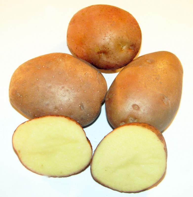 Купить Семена картофеля ПІКАССО (ІІ репр.) купить в Украине, Картофель семенной сорт Пикассо 2 репродукция