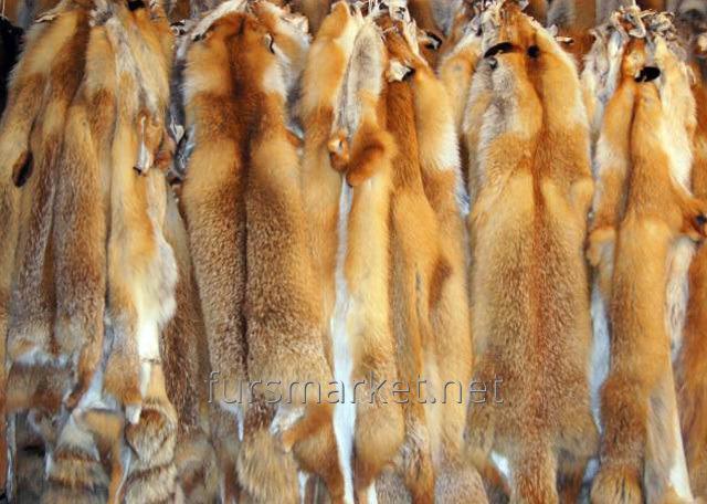 Pele de raposa